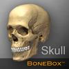 骨架盒:头骨查看助手