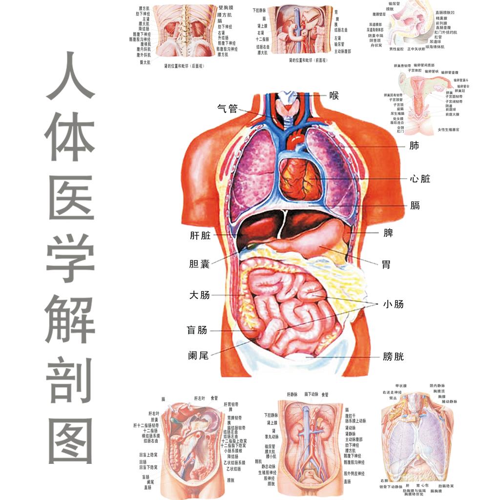 心脏解剖图手绘简笔简单
