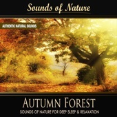 Autumn Forest (Nature Sounds) - Single