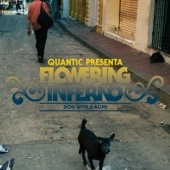 Dog With A Rope (Quantic Presenta Flowering Inferno)
