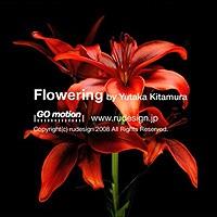 Flowering 花の開花