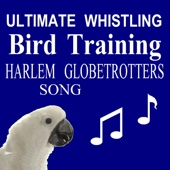 Ultimate Whistling Bird Training: Harlem Globetrotters Theme Song (Sweet Georgia Brown) - Dave Santucci
