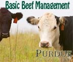 Beef Management