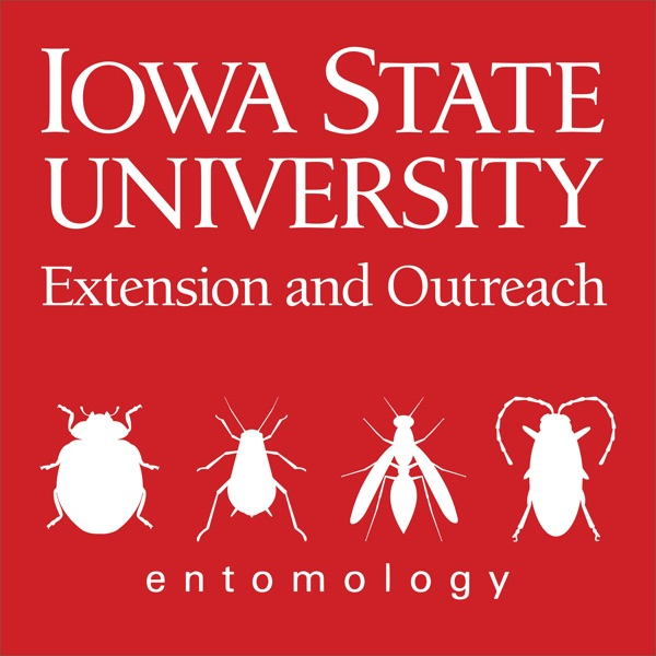 Soybean Pest Podcast