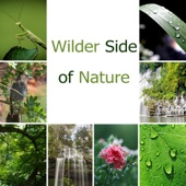 Wilder Side of Nature: Calming Grasshopper Sounds, Soft Bird, Rain and Waterfalls, Native Flute for Sleeping, Meditation & Concentration