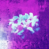 Purple Flowers - Kende & Moh Flow