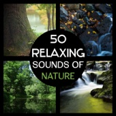 50 Relaxing Sounds of Nature – Sounds of Rain and Waterfall, Meditation in the Forest, Yoga in Nature, Calming and Soothing Natural Sounds for Sleep