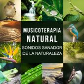 Musicoterapia Natural: Sonidos Sanador de la Naturaleza, Olas del Mar, Lluvia, Canto de los Pájaros, Ranas y Grillos