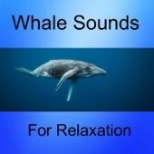Whale and Seagull Sounds