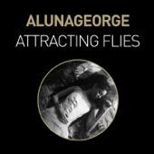 Attracting Flies - Single