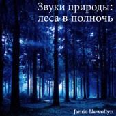 Звуки природы: леса в полночь