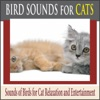Bird Sounds for Cats Sounds of Birds for Cat Relaxation and Entertainment