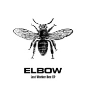 Lost Worker Bee - EP cover art