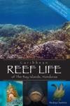 Caribbean Reef Life