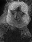 The Scratch Monkey