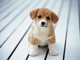 All About Dogs - Oleksandr Kotenko Book