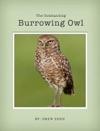 The Amazing Burrowing Owl