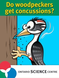 DO WOODPECKERS GET CONCUSSIONS? THE SCIENCE OF BRAIN INJURIES.