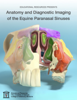 Educational Resources, University of Georgia - Anatomy and Diagnostic Imaging of the Equine Paranasal Sinuses artwork