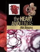 The Heart and Lungs