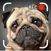 Cachorro Parlante