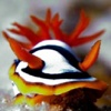 AWESOME NUDIBRANCHES -- Colorful Salt Water Aquarium Fish / Sea Creatures