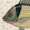 Especies Marinas