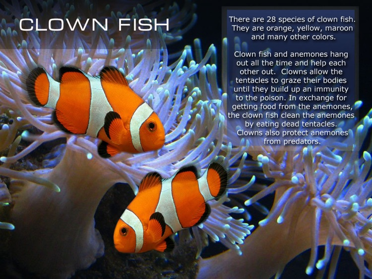 Kids Ocean Encyclopedia. Book and video for children. Sea life. by ...