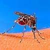 蚊の-あなたのデバイスのためのあなたの血とサイレントサウンドを吸い