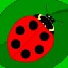 Maths Bugs