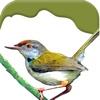 Birds on Planet Earth
