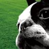 Dog Training Sound Set(ドッグトレーナーサウンドセット)