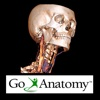 Go Anatomy for iPad - Head, neck and brain