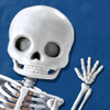 Skeleton Dance by Busy Brain Media - The Fun Educational Puzzle Game that Teaches Kids the Name and Position of Bones in