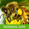 BioBees - The Barefoot Beekeper Talking About The Natural Approach To Beekeeping