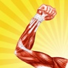 Human Muscle Encyclopedia Plus+