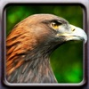 Birds! app for iPhone/iPad