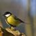 Birds of Britain HD
