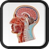 Atlante anatomico umano (AppStore Link)