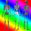 3D Human Anatomy Skeleton