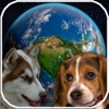 Amazing Earth 3D: Dogs