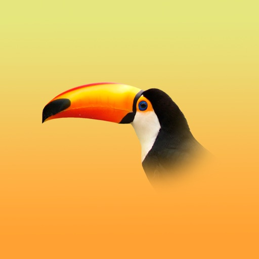 Toucan 6: calendar + todo + notes