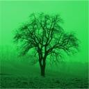 Baumbestimmung