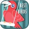 最高の鳥の音+