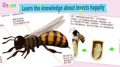 download Bee - InsectWorld A story book about insects for children apps 4