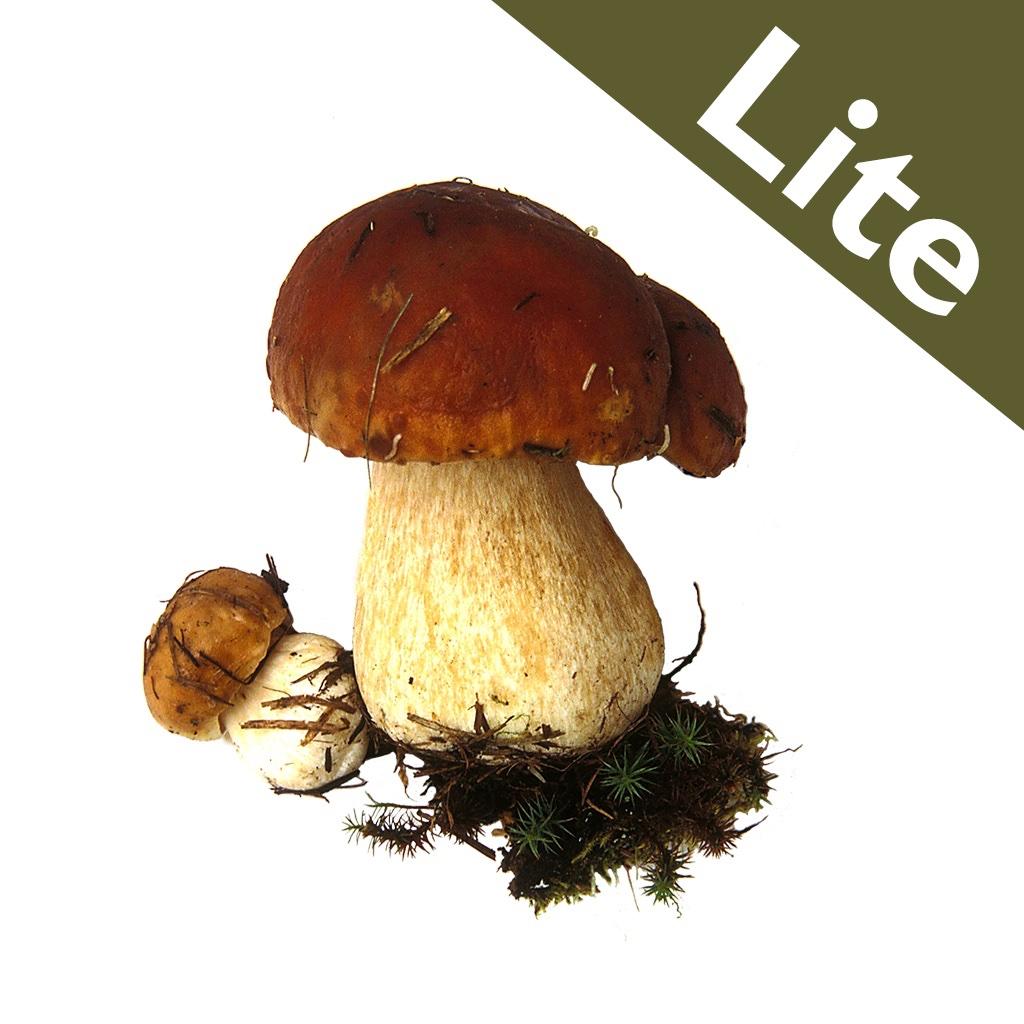 Roger's Mushrooms  icon