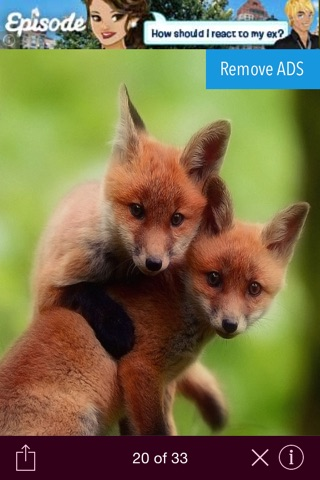 Wild animals wallpaper screenshot 4