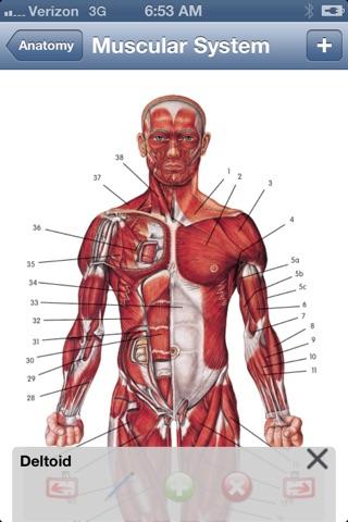 Anatomy Lite screenshot 1