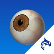Eye Decide - Education & Engagement