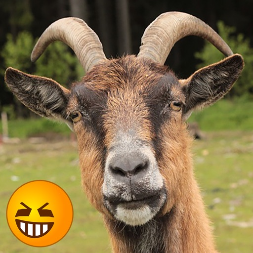 Funny Pictures Of Goats Funny Goat Soun...
